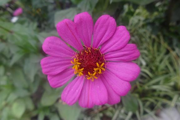 flower recrop